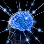 brain-7639821